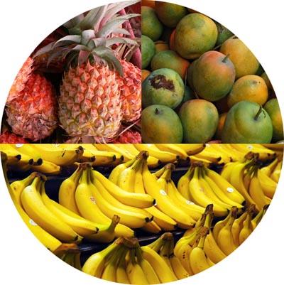 collecte fruits exotiques